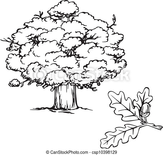 Acorn Tree Drawing Oak Tree And Branch With Acorn