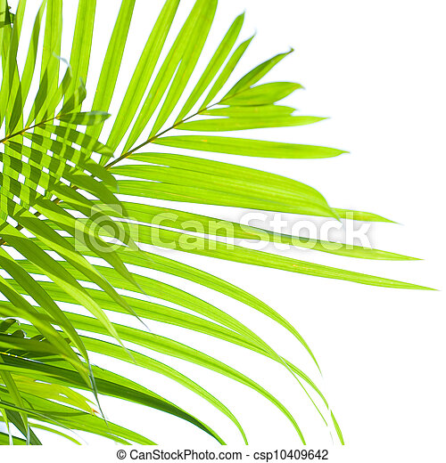 Palm leaves swaying in the breeze on white background - csp10409642