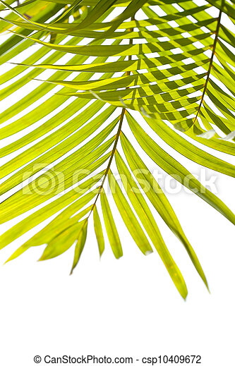 Palm leaves swaying in the breeze on white background - csp10409672