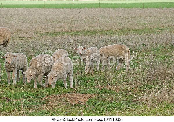 mammal - csp10411662