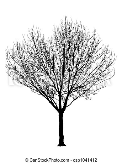 Bare Tree Silhouette Isolation - csp1041412