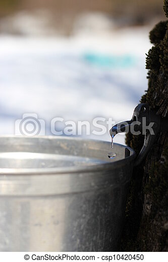Maple syrup/sap falling - csp10420450