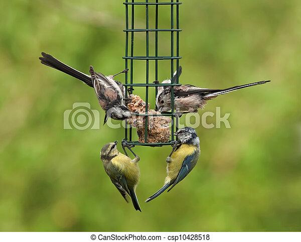 Birds On A Feeder - csp10428518