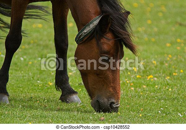 New Forest Wild Pony - csp10428552