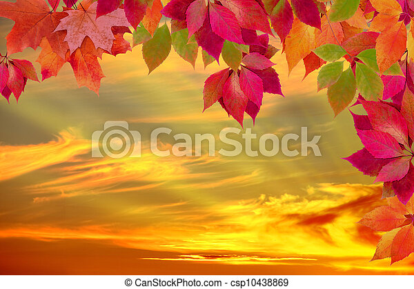 autumn leaves against the sunset - csp10438869