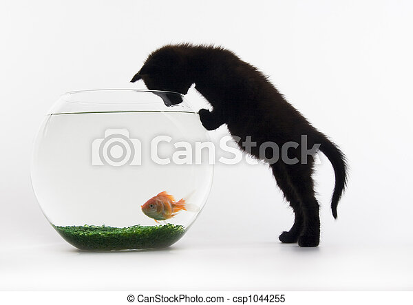 Cat - the small furry animal with four legs and a tail; people often keep cats as pets.