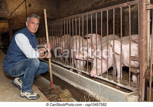 Farmer feeding pigs