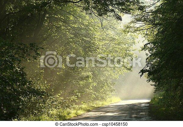 Spring forest at dusk - csp10458150