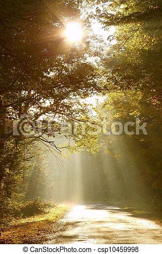 otoño, bosque, camino, mañana - csp10459998