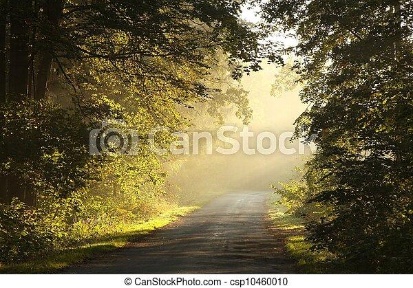 Rural lane at dawn - csp10460010