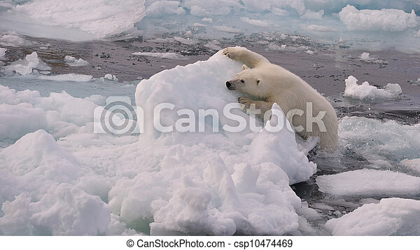 POlar Bear cub - csp10474469