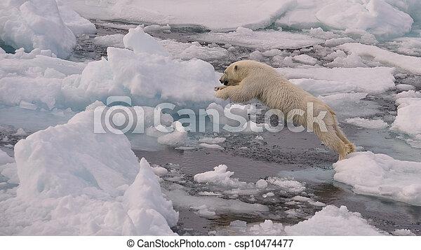 Polar Bear cub - csp10474477
