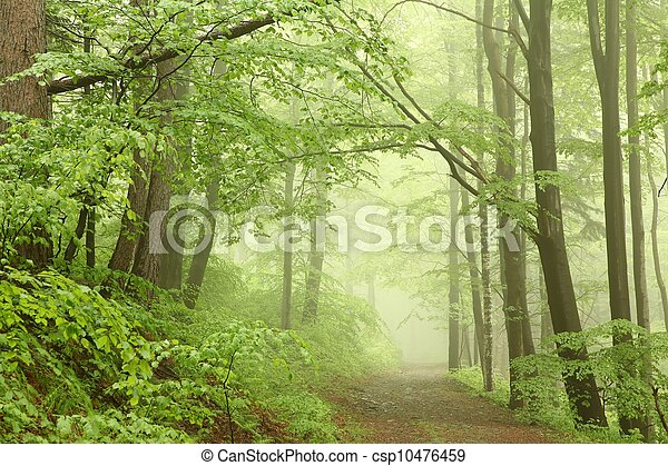 Misty spring forest - csp10476459