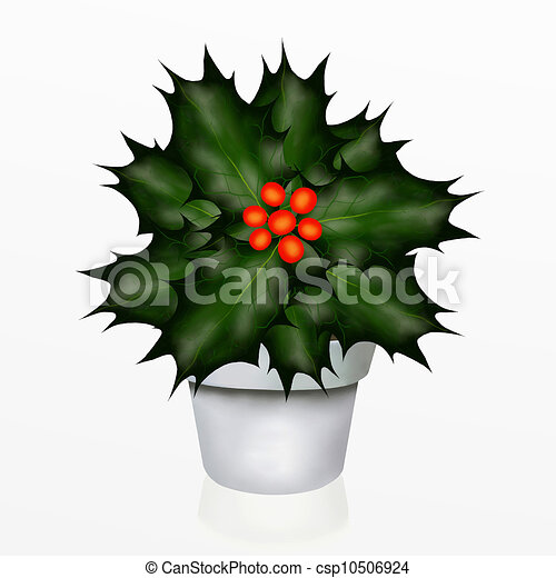 A Christmas Holly Tree in White Pot - csp10506924