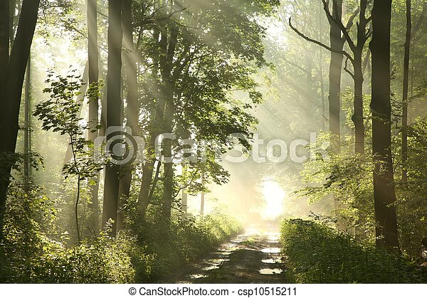 Path in spring woods at dawn - csp10515211