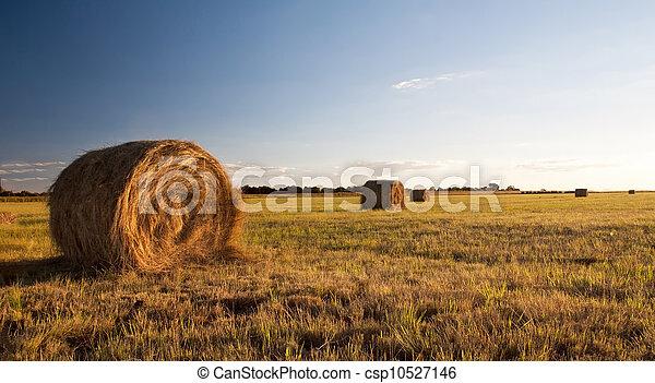 Bale field - csp10527146