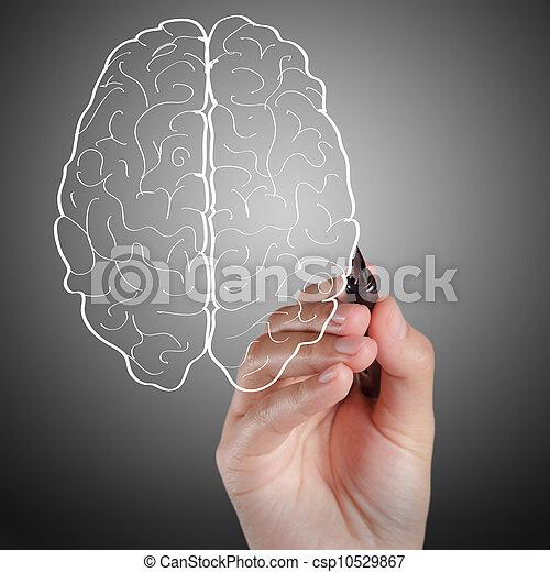 gehirn,  Hand, zieht, zeichen - csp10529867
