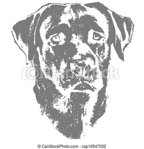 Labrador Retriever Drawings Labrador Retriever