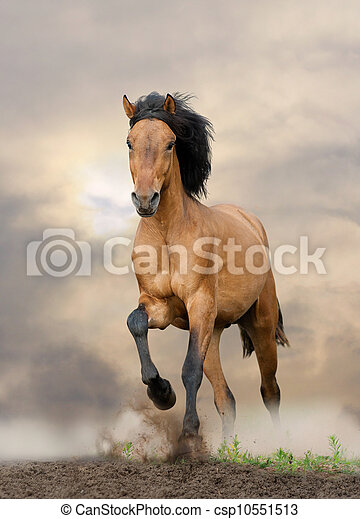 wild stallion running in sunset - csp10551513