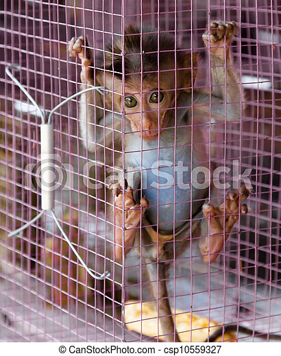 Stock Photo of Forlorn pet monkey for sale - Sad Macaque baby trapped ...
