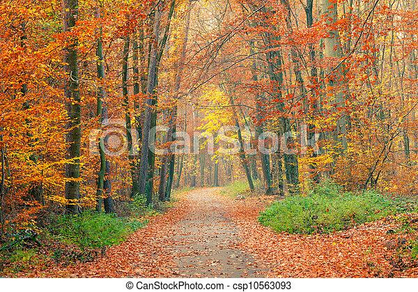 otoño, bosque, camino - csp10563093