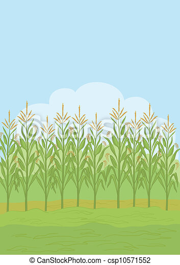 International Harvester Logo >> Clipart Vector of Field with maize - Agricultural rural landscape, field with... csp10571552 ...