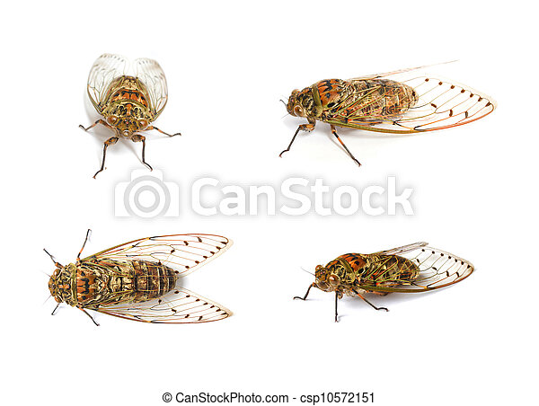 set of cicada insect - csp10572151