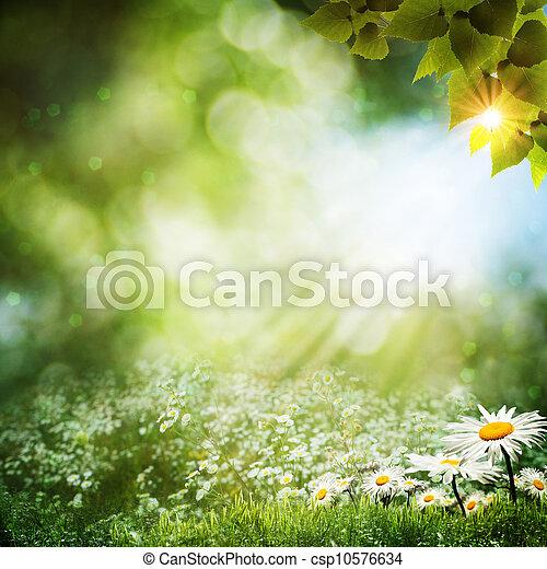 sommer, Abstrakt, blumen, Hintergruende, gänseblumen - csp10576634