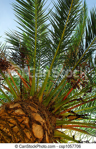 Palm tree canopy - csp1057706