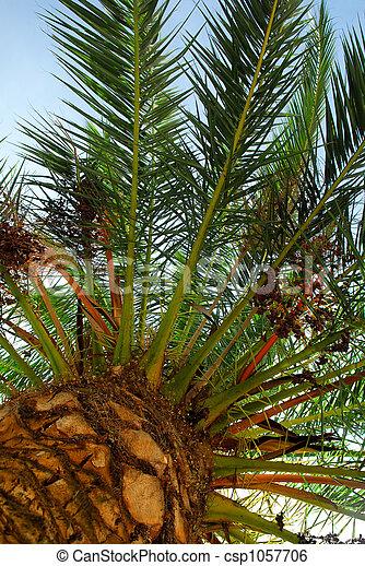 Palm tree canopy - csp1057706