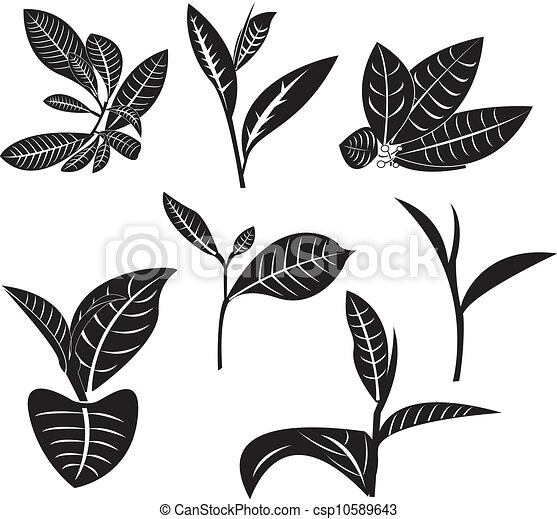Tea Leaf 10589643