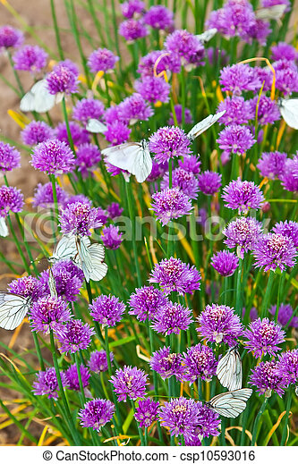Flowers plant  with Butterflies  - csp10593016
