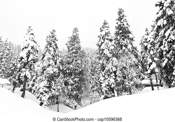 Stock Image of Dark and Misty Forest in Winter Landscape (black ...