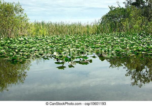 Florida Everglades - csp10601193