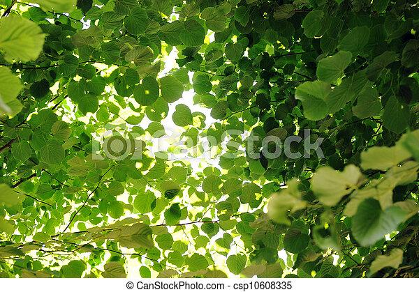 photo feuilles caduques arbre image images photo libre de droits photos sous licence. Black Bedroom Furniture Sets. Home Design Ideas