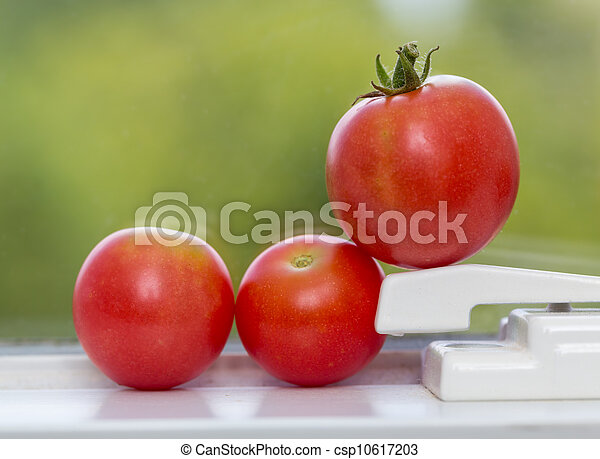 Row of tomatoes on window sill - csp10617203