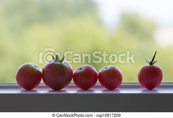 Row of tomatoes on window sill - csp10617209