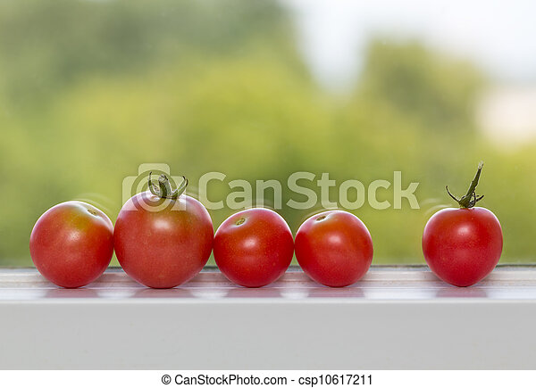 Row of tomatoes on window sill - csp10617211