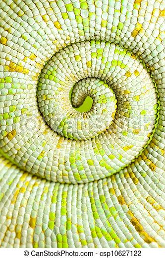 Chameleon tail - csp10627122