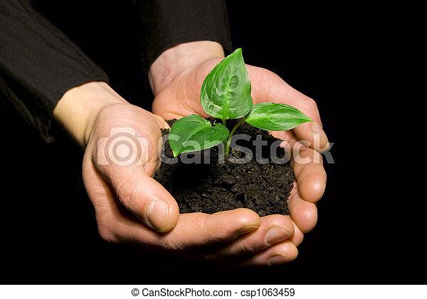 土壌, 苗木, 手を持つ - csp1063459