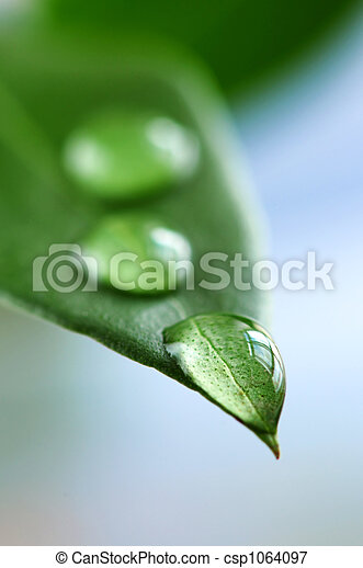 Green leaf with water drops - csp1064097
