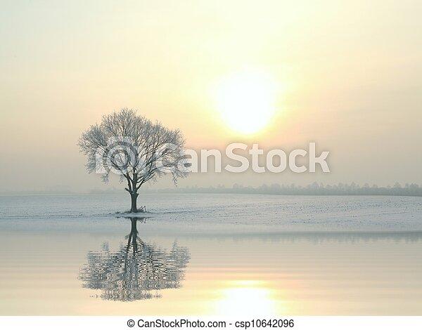 Oak tree on a sunny winter morning - csp10642096