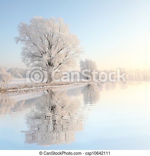 alvorada, árvore, Inverno, paisagem - csp10642111