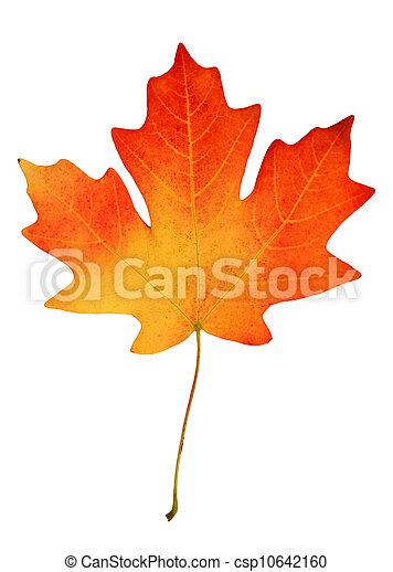 fall leaf - csp10642160