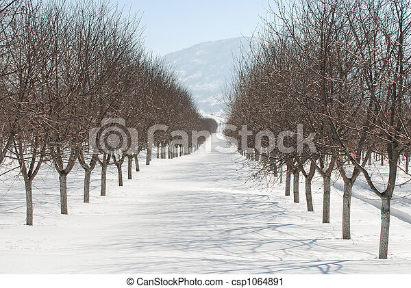 Orchard in Winter - csp1064891