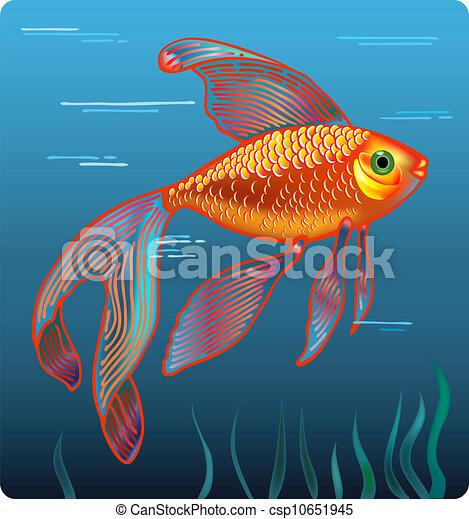 Dorada pez dibujo  Imagui