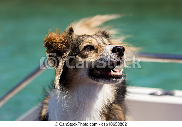Happy dog on a boat