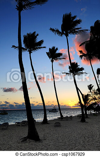 Tropical sunrise - csp1067929