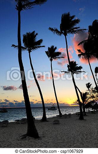 Tropical sunrise - csp1067929