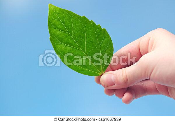 Hand holding green leaf - csp1067939